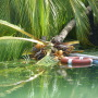 Un cocotier est tombé dans la piscine