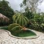 Cocotier couché dans la piscine