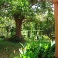 Le jardin vue de la chambre du bas